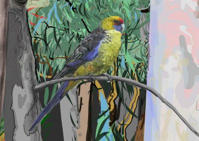 Tasmanian Green Rosella-detail