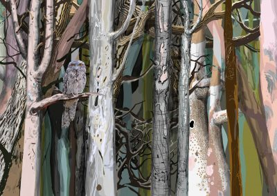 Tawny Frogmouth night forest