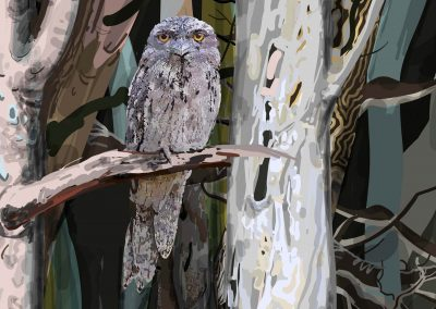 Tawny Frogmouth night forest-detail